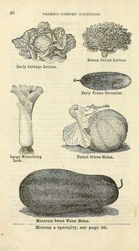 Image of garden lettuce
