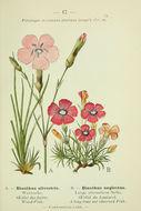 Image of woodland pink