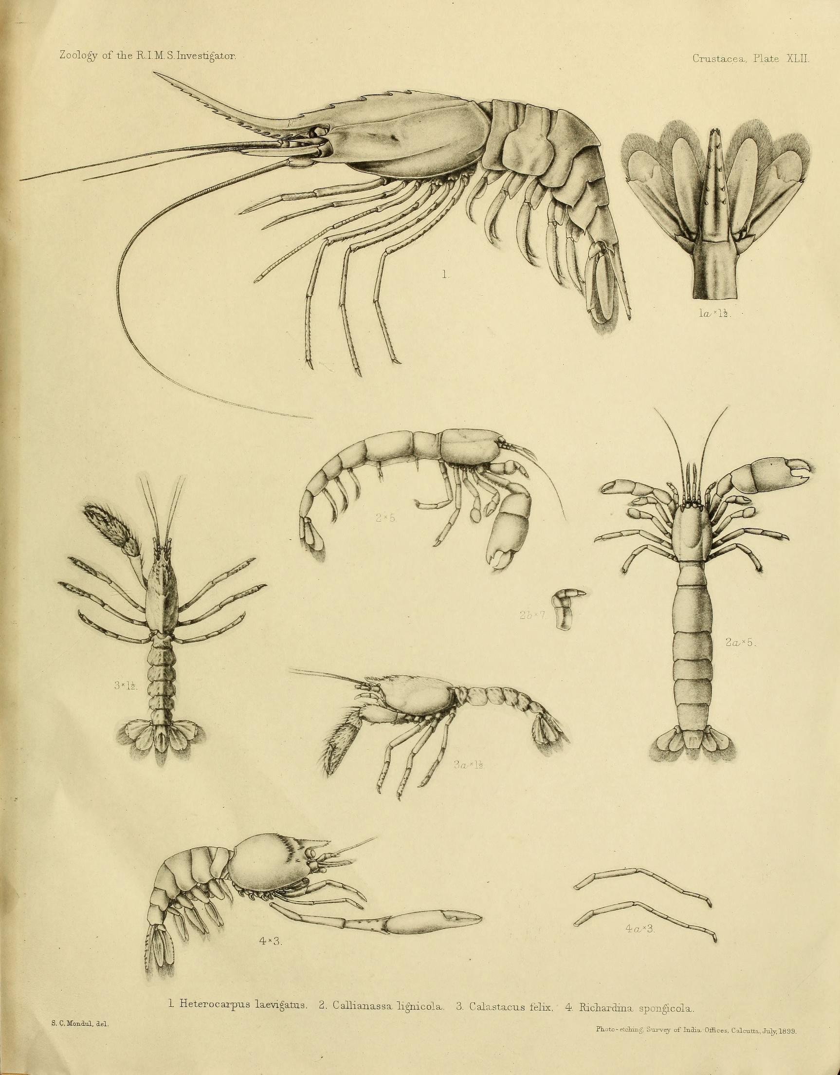 Image of smooth nylon shrimp