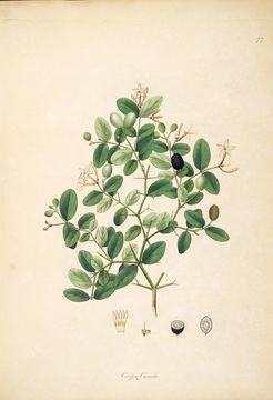 Image of Plantae