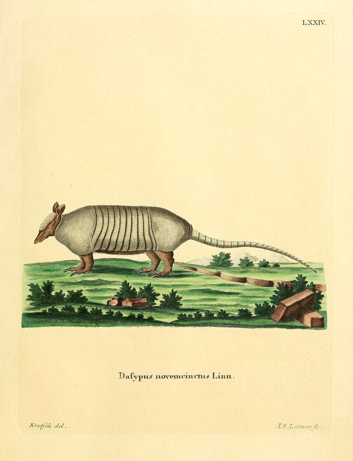 Image of Nine-banded or Greater Long-nosed Armadillo