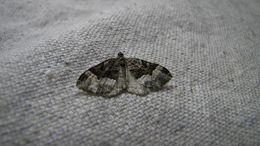 Image of Sharp-angled Carpet