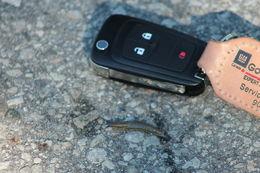 Image of Ferussac's orange soled slug