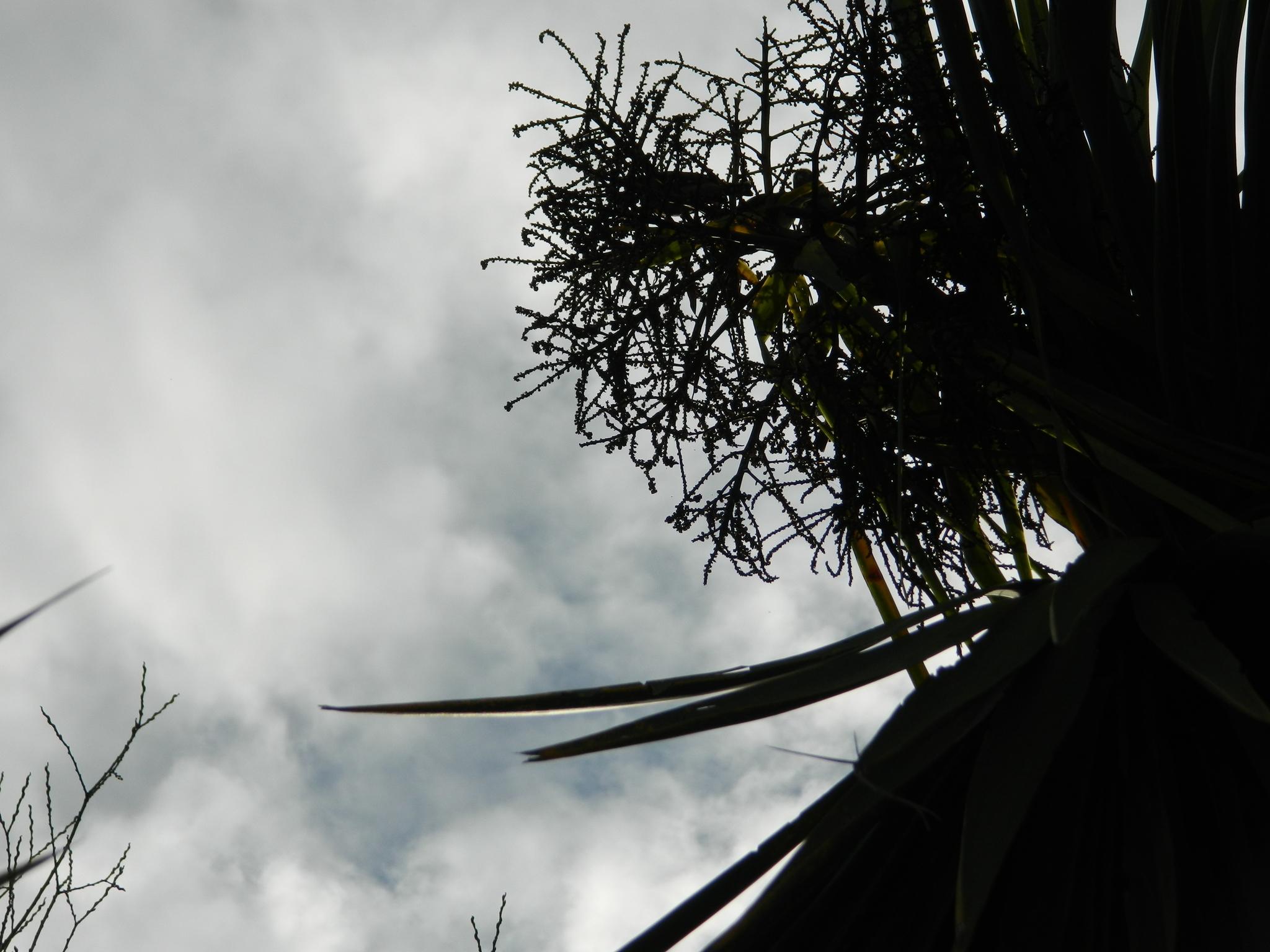 Image of tahou