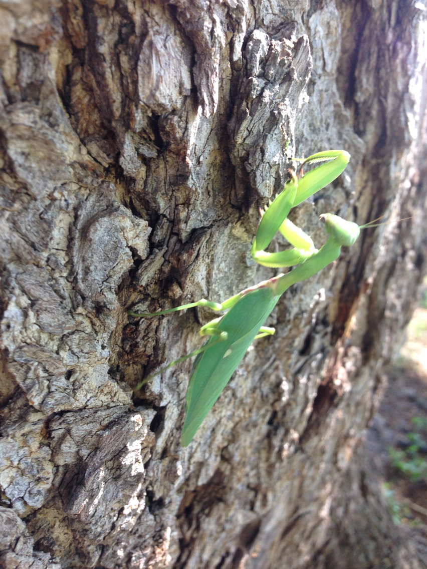 18.https   www inaturalist org photos 1288299