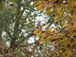 Image of Birch