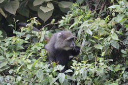 Image of blue monkey