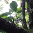 Image of <i>Ithomia leila</i>
