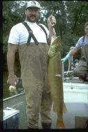 Image of Muskellunge