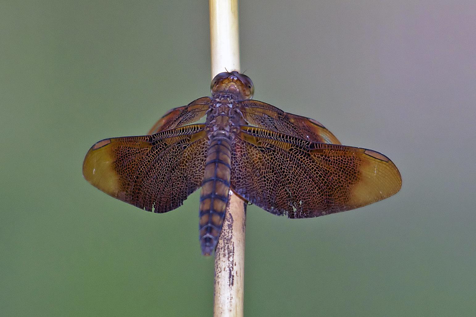 Image of Black Stream Glider
