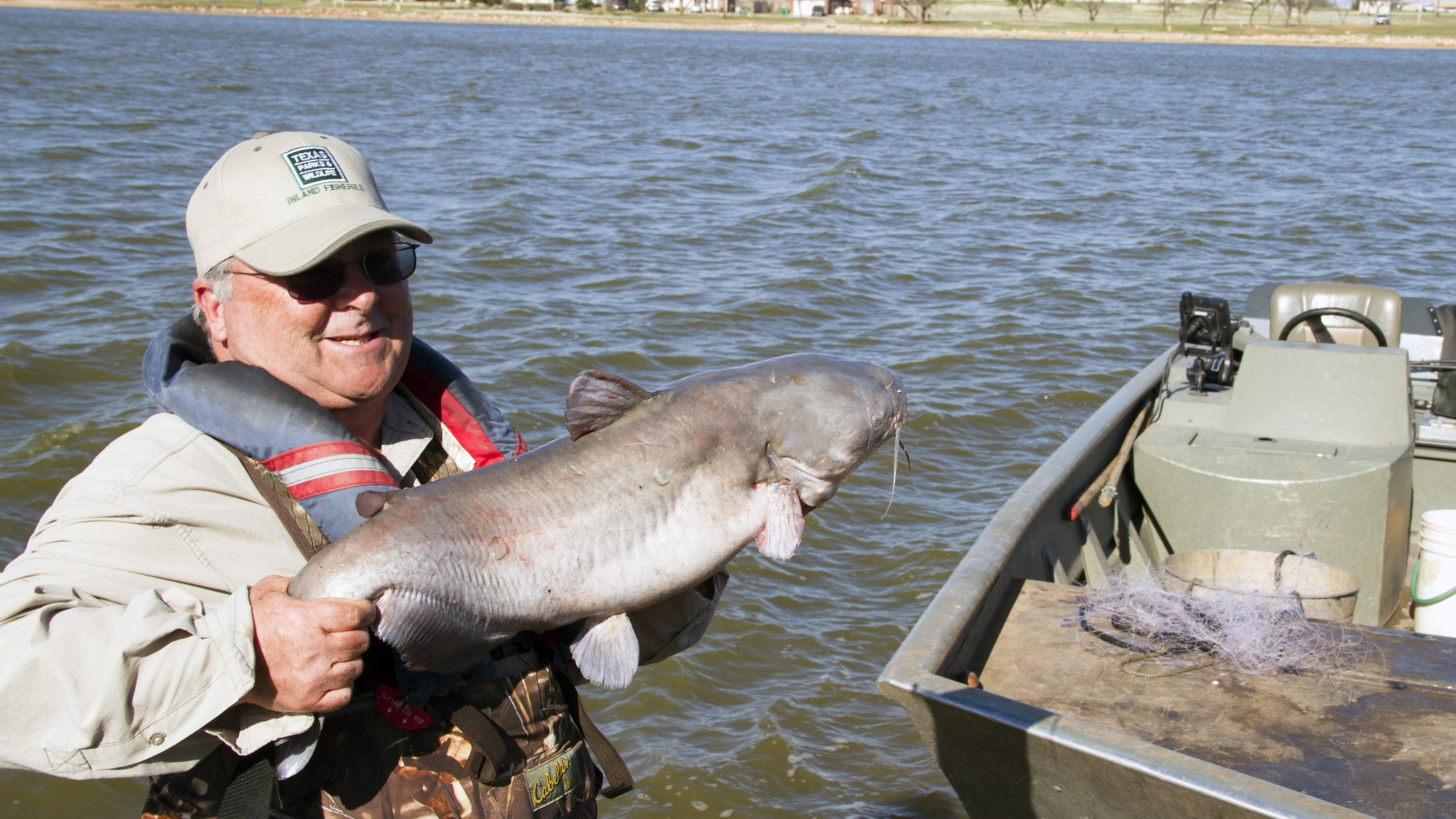 Image of channel catfish