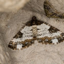 Image of Pretty Chalk Carpet