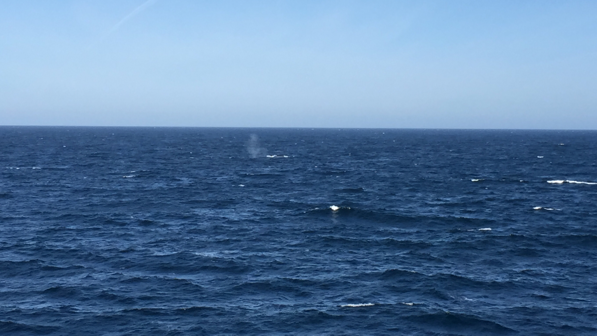 Image of Blue whale