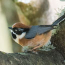 18.https   www inaturalist org photos 2787062.130x130