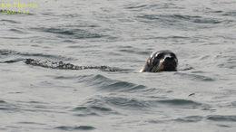 Image of Larga Seal