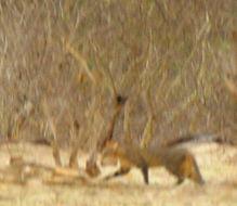 Image of <i>Felis silvestris cafra</i> Desmarest 1822