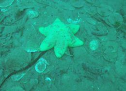 Image of Tesselated slime star