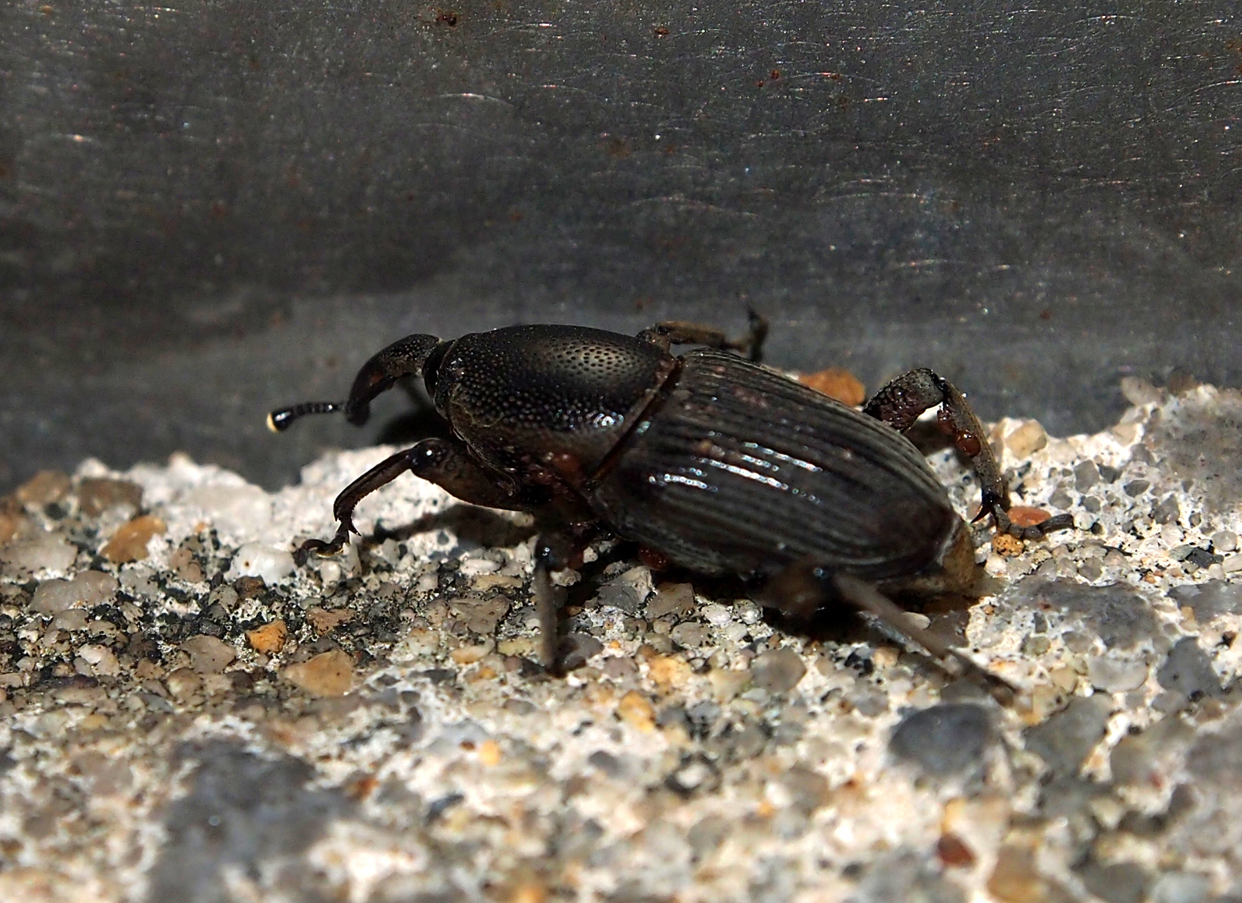 18.https   www inaturalist org photos 3864939