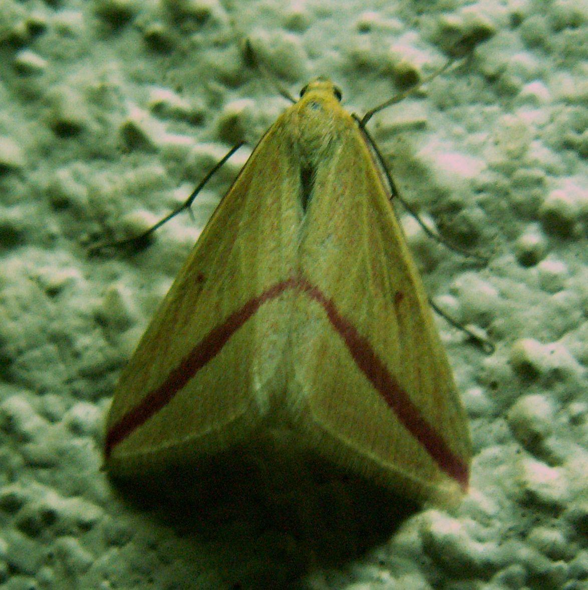 Image of The Vestal