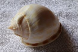 Image of checkered bonnet