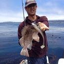 Image of Kelp rockfish
