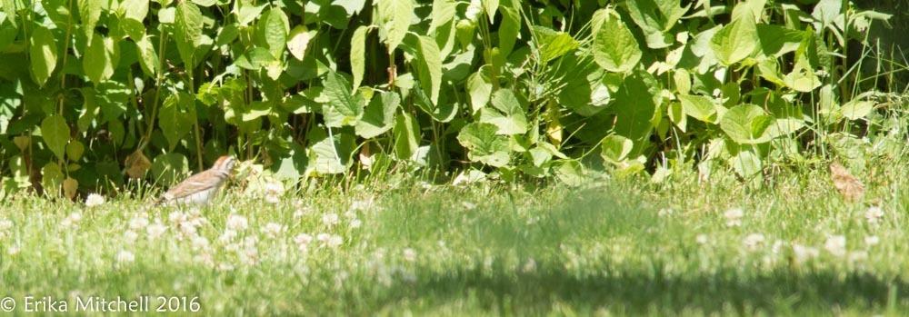 Sivun kenttäsirkkuli kuva