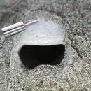 Image of Miwok Trapdoor Spider