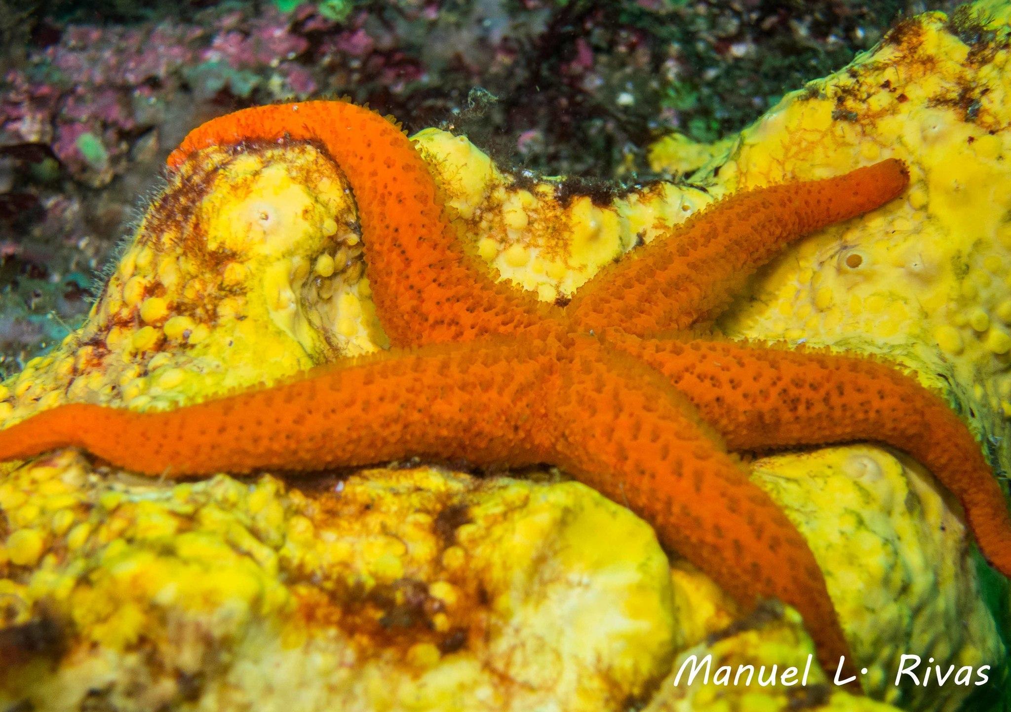 Image of red starfish