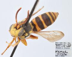 Image of <i>Nomada vincta</i> Say 1837