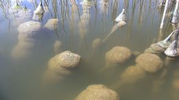 Image of Magnificent Bryozoan