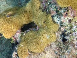 Image of caribbean sea mat
