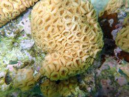 Image of caribbean sea mat