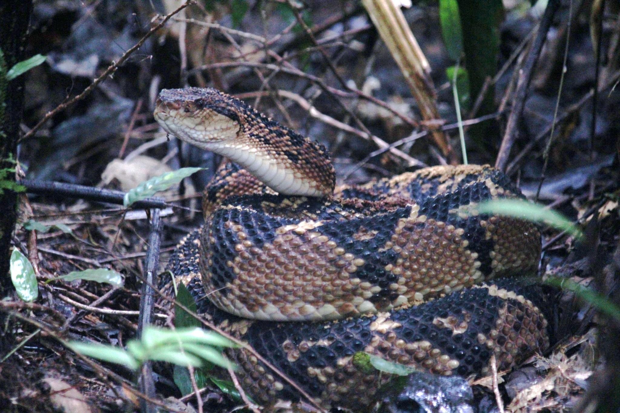 Image of Bushmaster