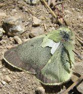 Image of Sierra Green Sulphur