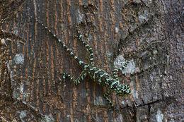 Image of Tree Runner