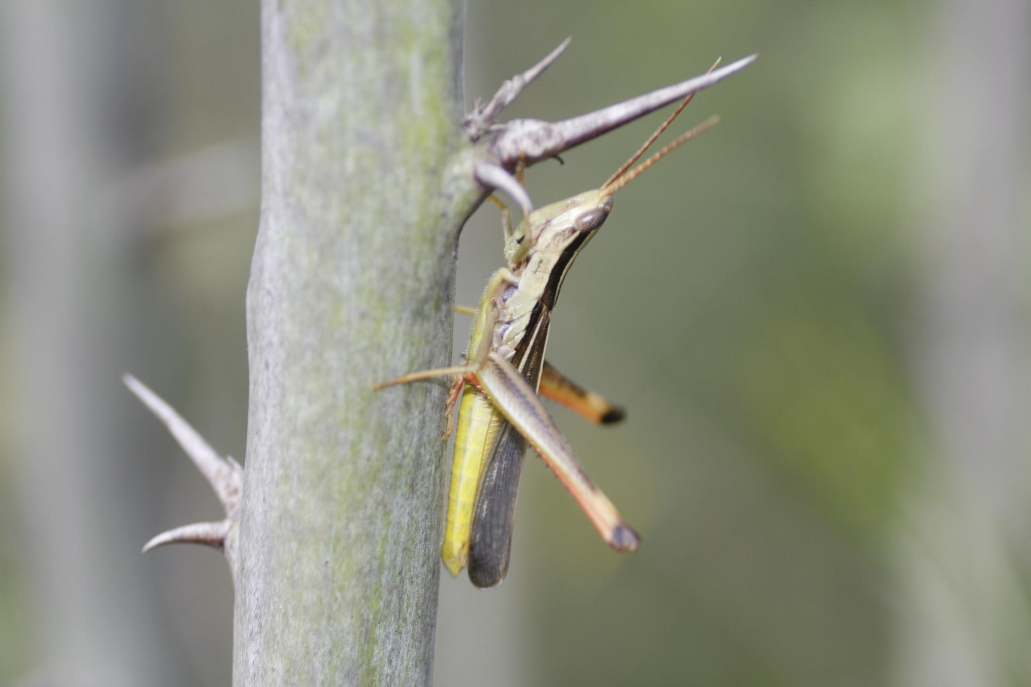 Image of Lively Mermiria