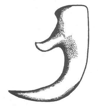 Image of Spokan Anabrus