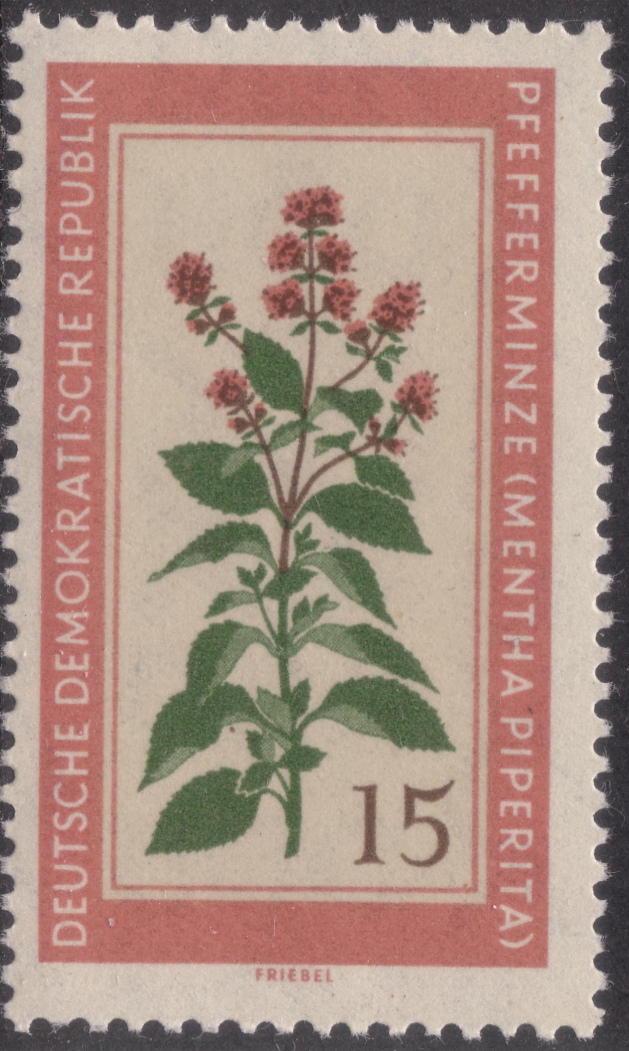 Image of Mentha