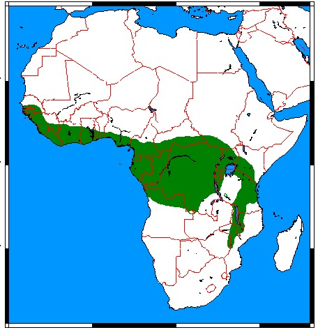 Map of African palm civet family