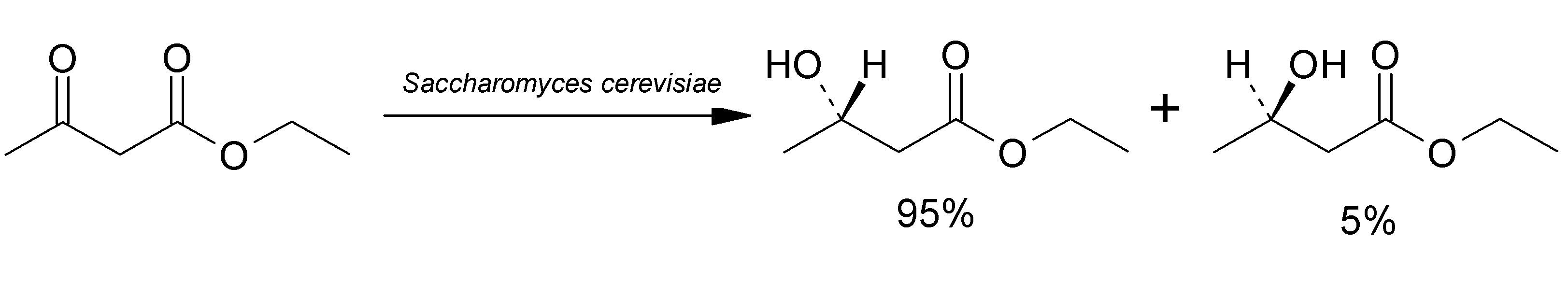 Image of Baker's yeast