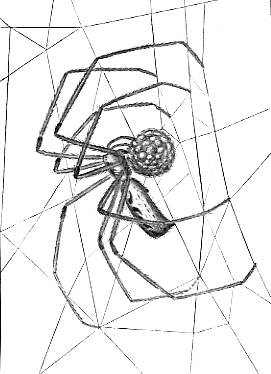 Image of Long-bodied Cellar Spider