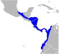"<span class=""translation_missing"" title=""translation missing: en.medium.untitled.map_image_of, page_name: Mantled Howler Monkey"">Map Image Of</span>"