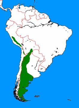 "<span class=""translation_missing"" title=""translation missing: en.medium.untitled.map_image_of, page_name: &lt;i&gt;Lama guanicoe&lt;/i&gt;"">Map Image Of</span>"