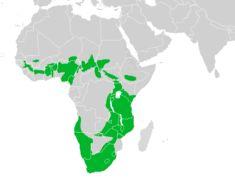 Map of <i>Hirundo fuligula</i>