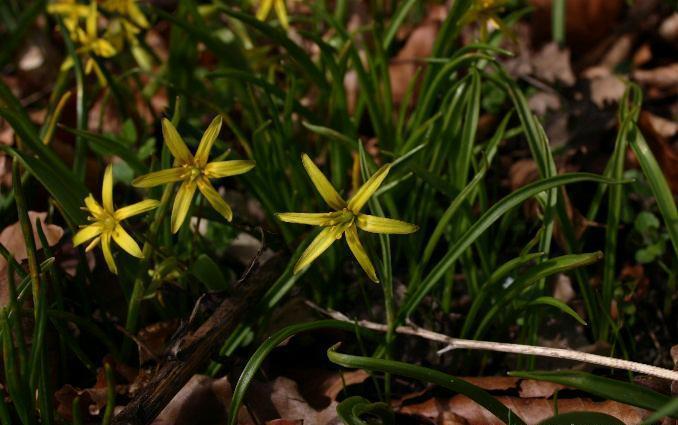 Image of yellow star of Bethlehem