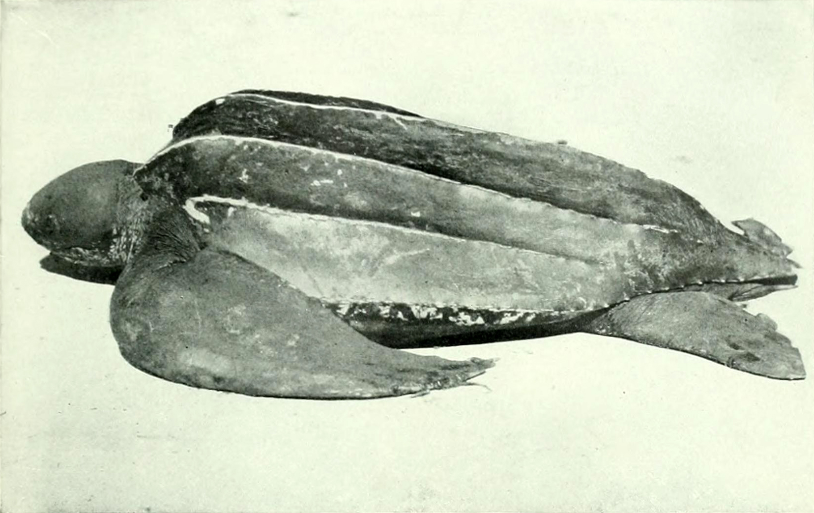 Image of Coffin-back