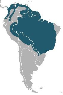 "<span class=""translation_missing"" title=""translation missing: en.medium.untitled.map_image_of, page_name: Speothos"">Map Image Of</span>"