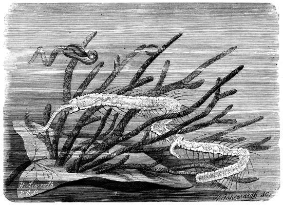 Image of sludge worms