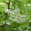 Image of Jack tree