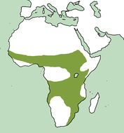 "<span class=""translation_missing"" title=""translation missing: en.medium.untitled.map_image_of, page_name: Otidiformes"">Map Image Of</span>"
